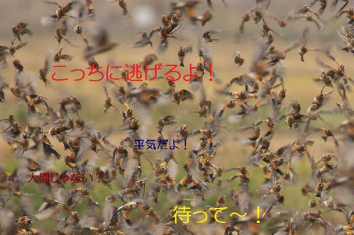 120_20121220193756.jpg