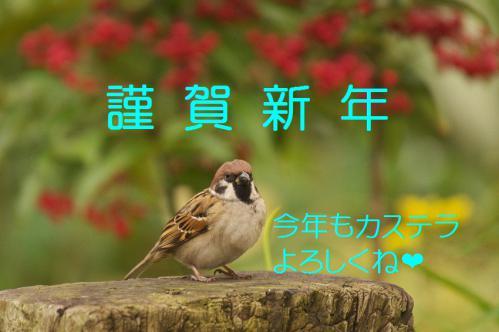 120_20121228215938.jpg
