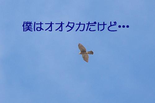 120_20130105211126.jpg