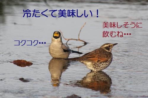 120_20130121215426.jpg