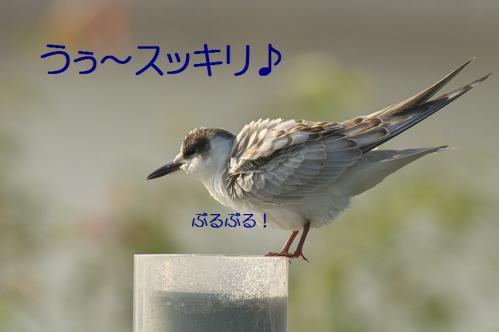 125_20121009191650.jpg