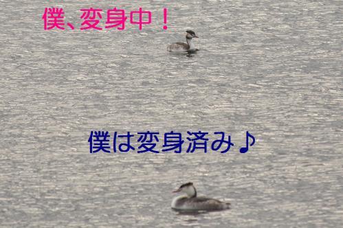 125_20121130220808.jpg