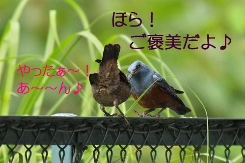 130_20120612215226.jpg