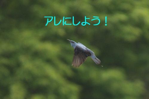 130_20120613233726.jpg