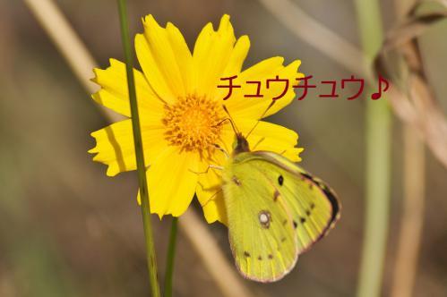 130_20120930203805.jpg