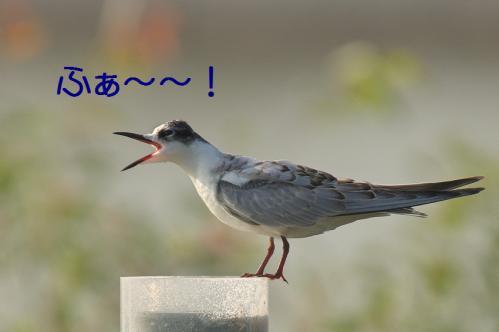 130_20121009191650.jpg