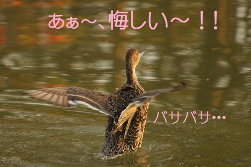 130_20121112215549.jpg