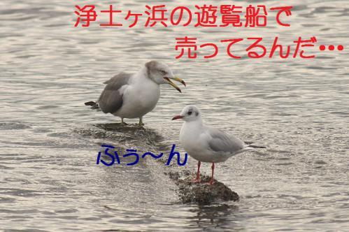 130_20121124215554.jpg