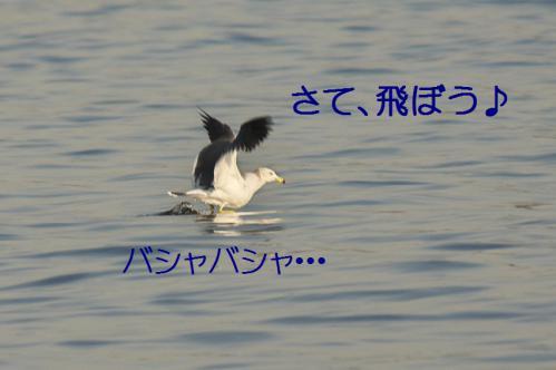 130_20121125192429.jpg