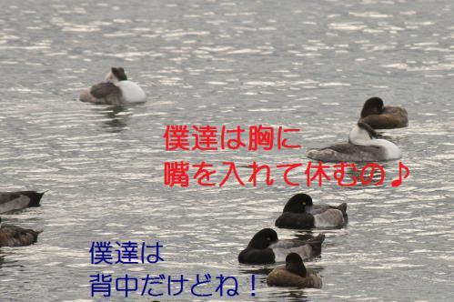 130_20121130220812.jpg