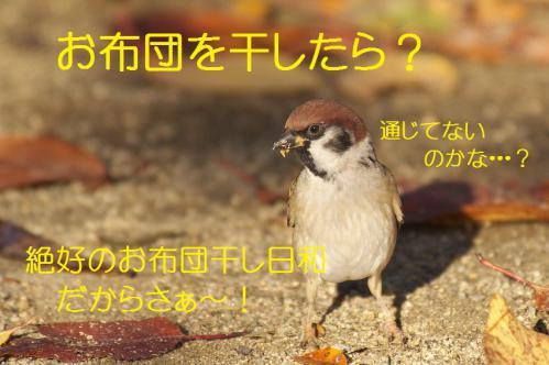 130_20121206193556.jpg