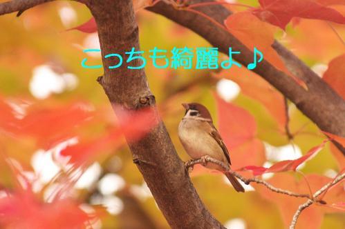 130_20121206222632.jpg