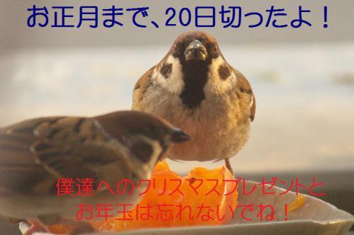130_20121212214701.jpg