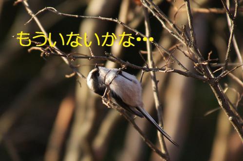 130_20121213214726.jpg