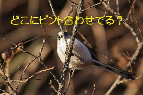 130_20121214214932.jpg