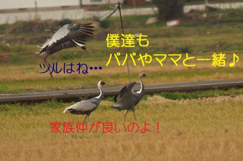 130_20121215200841.jpg