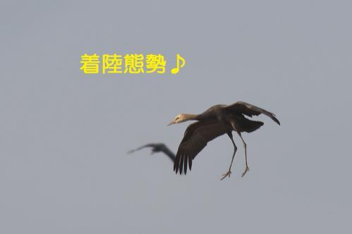 130_20121216203006.jpg