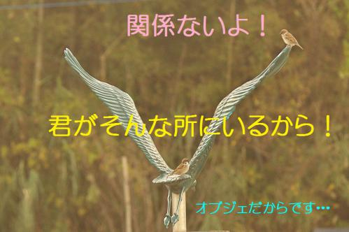 130_20121217024704.jpg