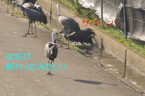 130_20121218215720.jpg