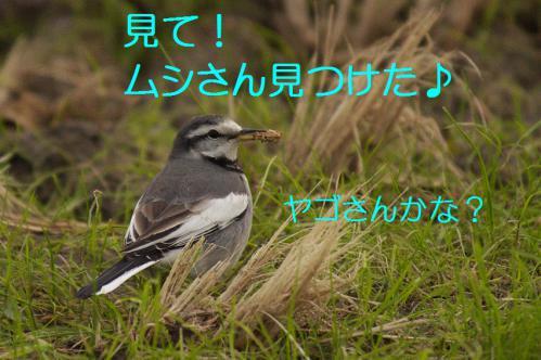 130_20121220193802.jpg