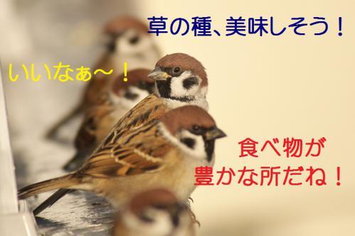 130_20121221215135.jpg