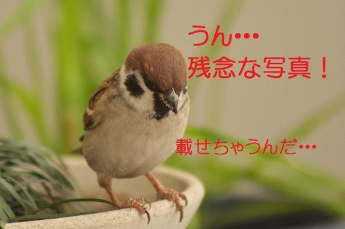 130_20121222194657.jpg