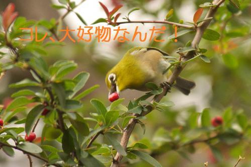 130_20121225223508.jpg