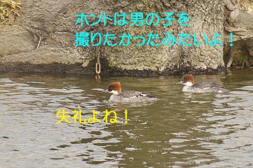 130_20121227213640.jpg