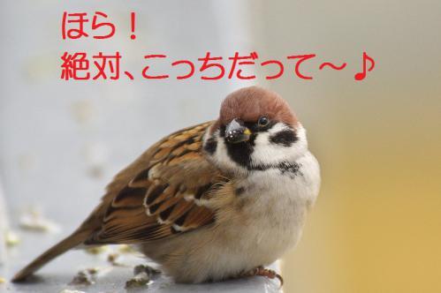 130_20121228215941.jpg