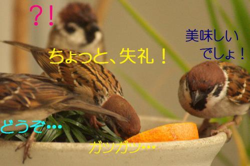 130_20121230221415.jpg