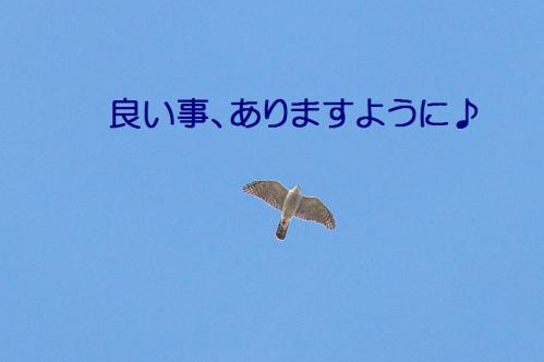 130_20130105211224.jpg
