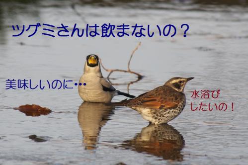 130_20130121215428.jpg