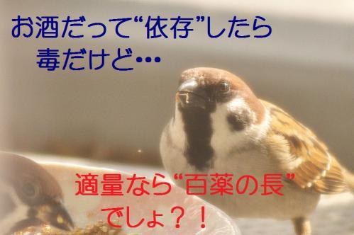 135_20121202212845.jpg
