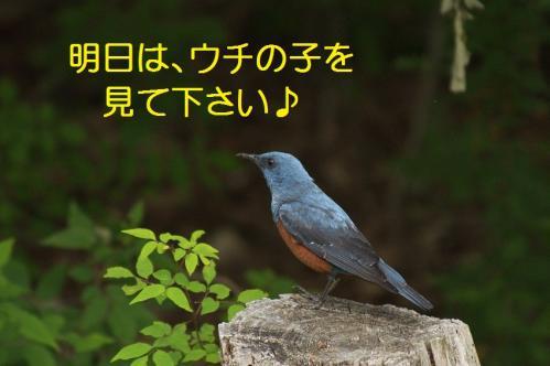 140_20120611231926.jpg