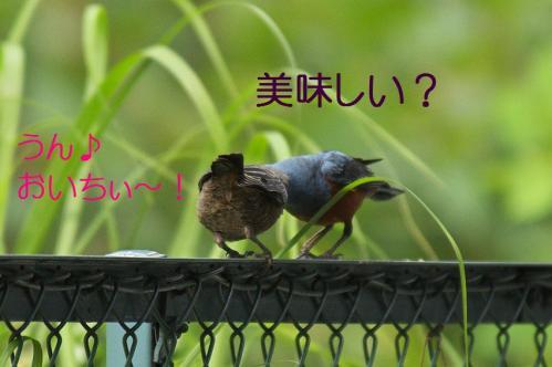 140_20120612215225.jpg
