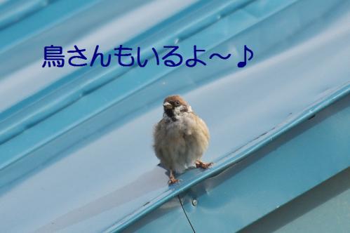 140_20120930203805.jpg