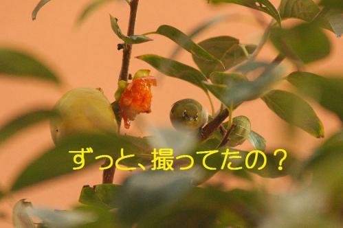 140_20121030223320.jpg