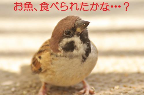 140_20121102220339.jpg