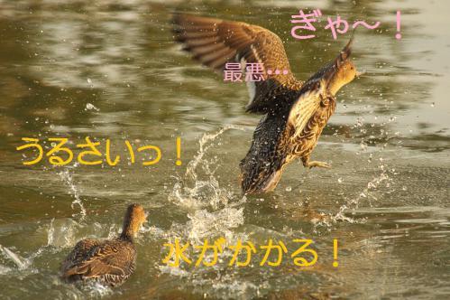 140_20121112215548.jpg