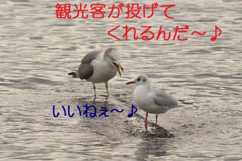 140_20121124215558.jpg