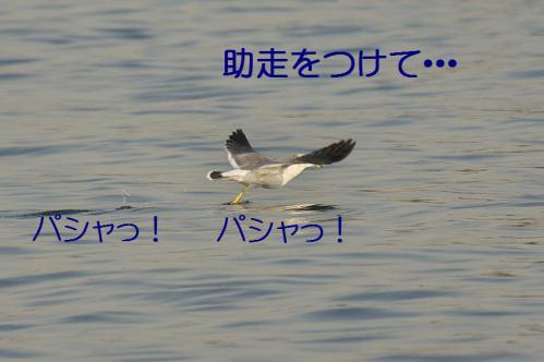 140_20121125192432.jpg