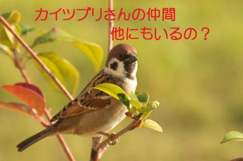 140_20121130220815.jpg