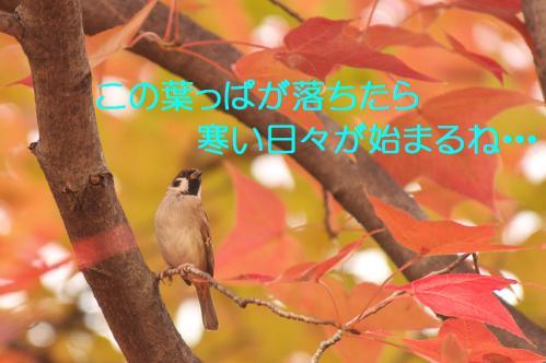 140_20121206222635.jpg