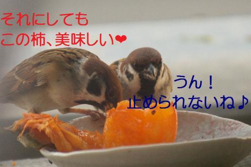140_20121212214708.jpg