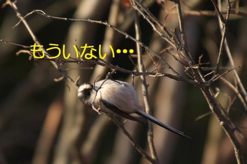 140_20121213214729.jpg