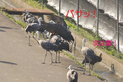 140_20121218215724.jpg