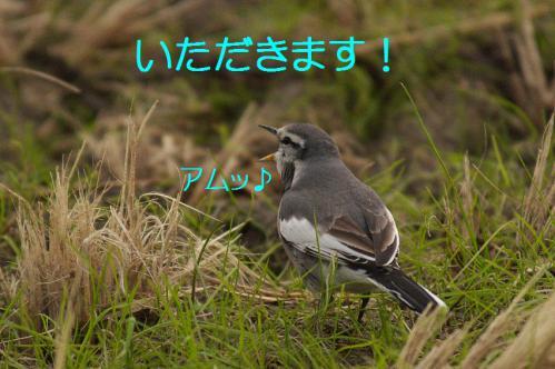 140_20121220193806.jpg