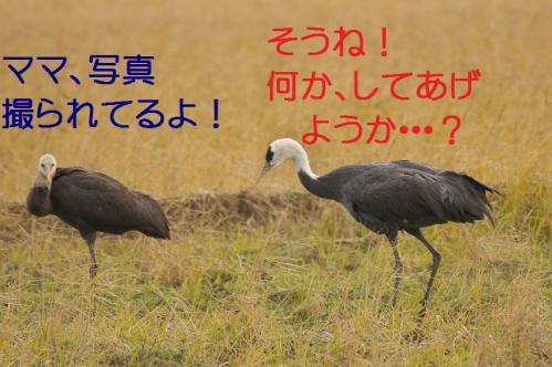 140_20121221215138.jpg
