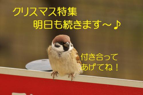 140_20121223184150.jpg