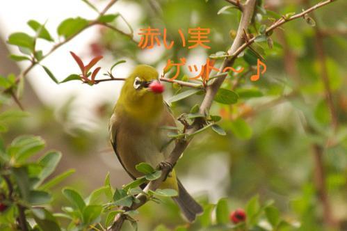 140_20121225223511.jpg